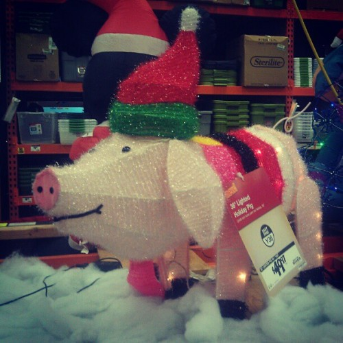 Holiday Pig?