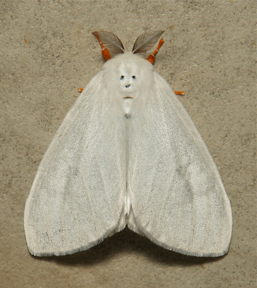 NEWSFLASH: The Abominable Snowman is Alive and Well and Living as a Moth by itchydogimages on Flickr.