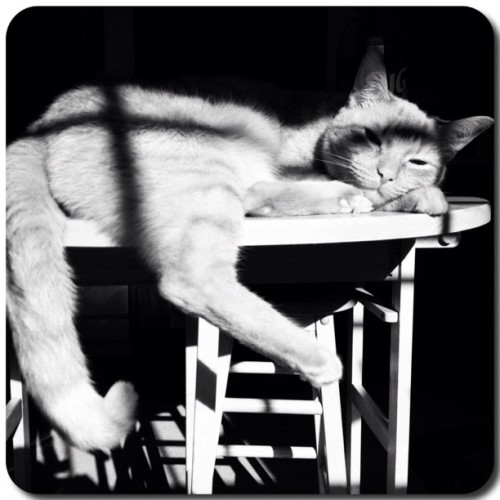 #FrameMagic #cat #buddy #pet #paw #love #family #table #sun #lazy #kitchen #catsofinstagram #instagramcats