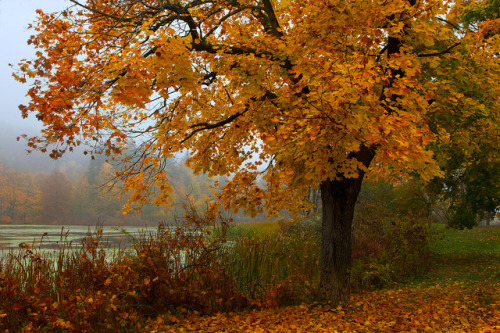 seizetheinfinite:  Yellow Leaves in the Fog by SunnyDazzled on Flickr.