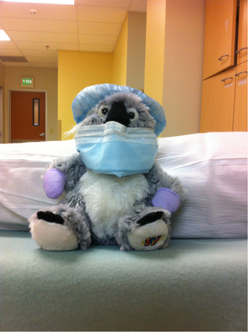 Pediatric day at work on Friday, led me to dressing my little patient's koala.