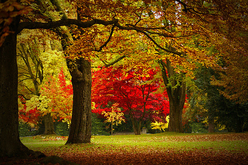 bluepueblo:  Autumn Red, Vancouver, Canada photo via moonnight
