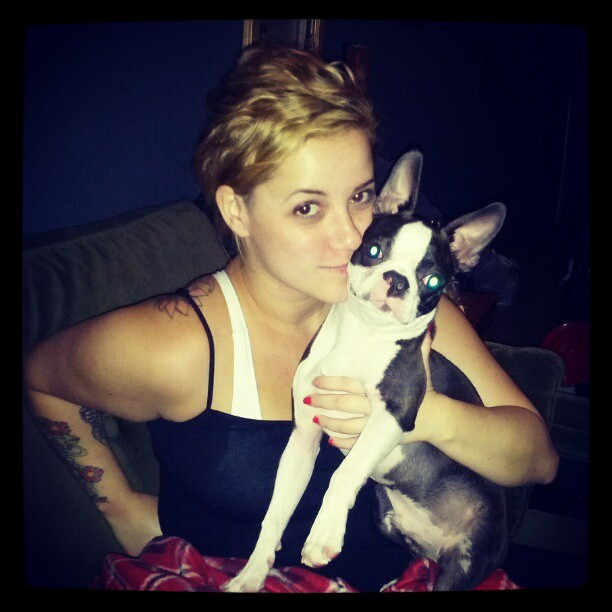 @katiebiese #bostonterrier #dog #blonde