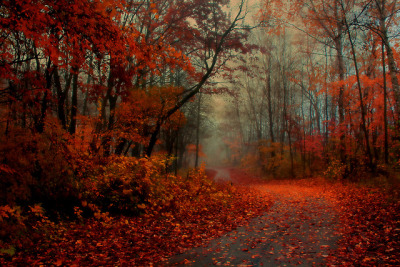 c1usterfuck:  Misty Morning Trail by Indy Kethdy on Flickr.