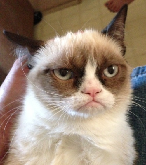 Grumpy cat is grumpy because you haven't read Kenn Navarro's Top 5 Mondo Shows yet. Shame. Shame on you. Also, GET OFF OUR LAWN.