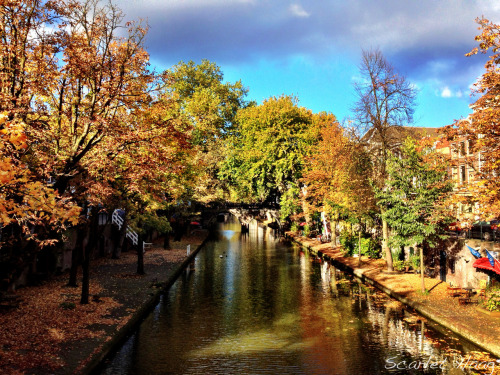 Fall colors on the gracht