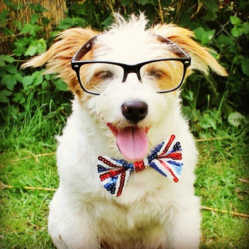 Looking dapper for Election Day 2012!  (Photo via ginny_jrt)