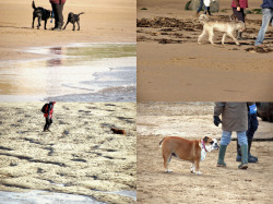 Wish we had a doggy like these lucky people down the beach the other day.