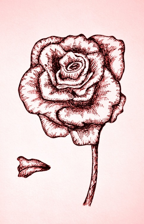 Pen and ink rose!
