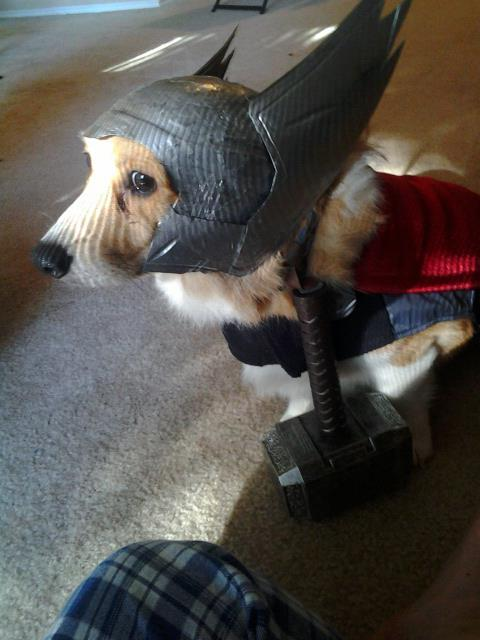 Thunderdog!!! corgiaddict:  Thorgi, Dog of THUNDER!