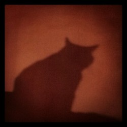 Shadow kitty.