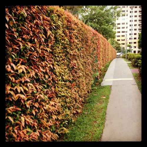 #Autumn in #Singapore??