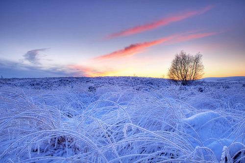 bluepueblo:  Blue Frost, West Yorkshire, England photo via forbidden