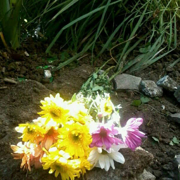 Flowers for my dog. I know you are happy now with God. I miss you. :'(( #dog #flowers