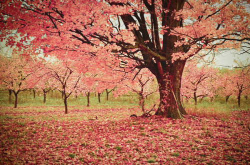 katiebukata:  Wind and Leaves by Joy StClaire