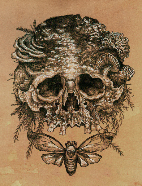 artparasite:  Skull With Cicada, Mister Beaudry - - - Follow Mister Beaudry on Tumblr HERE!