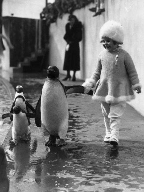 A little girl holds a penguin's flipper as they walk together at london zoo, may, 1937. photo by fox photos/getty images.