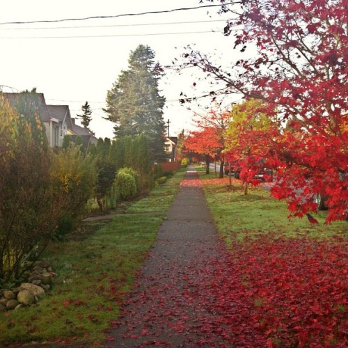 Early morning walk #fall #red #mapleleaf #raincouver #iphonography #iphone4 #instagram #instadaily #autumn #leaves #monday