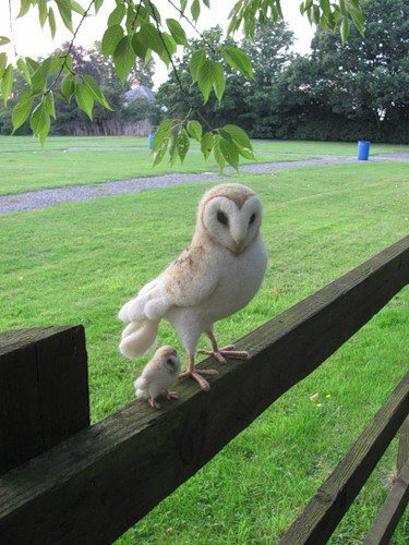 """Oh a picture of a youngish owl that's kinda cool I guess but not very noteworOH MY GOD THERE IS A BABY OWL NEXT TO THAT OTHER OWL OH MY GOD TINY MINIATURE VERSION OF THE FIRST OWL OH MY GOD OH MY GOD"""