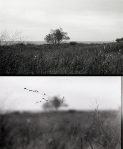 madoperator:  Headlands Diptych on Flickr.