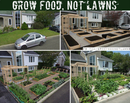 rawlivingfoods:  Just imagine how many resources are used up for lawns. And how amazing would it be to know where your food comes from? Grow food and fuel your life!    I think it would be interesting to see what things would be like if we all did this.