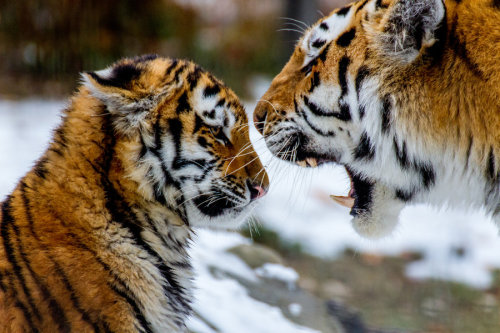 captivating-animals:  Life Lessons by ~nigel3