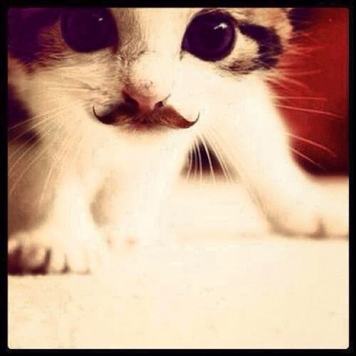 woah, it's Movember already!