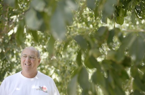 "EPA praises farmer's sustainable agriculture efforts  Russ Lester takes the long view with his Dixon Ridge Farms walnut orchards, a view that extends well beyond his lifetime. He wants to work the land in such a way that fertilizers don't — over time — diminish the fertile soils. He wants water to still be available for farmers generations from now. ""Sustainable agriculture"" is a phrase that has grown in popularity and Lester has his own definition. ""It's a simple definition, to say we can continue doing what we're doing for 1,000 years,"" Lester said. The federal Environmental Protection Agency Pacific Southwest Region thinks Lester is on the right track. It recently honored what it called 12 environmental heroes and named Lester its 2012 Sustainable Agriculture Champion. ""The winners, green heroes all, prove there are many ways to protect our air, water and land,"" Jared Blumenfeld, the agency's regional administrator, said in a press release. Lester finds himself in the company of Zero Waste Advocate winner Adobe Systems of San Jose, Green Business of the Year winner Frito-Lay in Casa Grande, Ariz., and Educational Leadership winner Guam Environmental Education Committee in Guam. The Environmental Protection Agency region covers California, Nevada, Arizona, Hawaii and the Pacific Territories. The Lester family has farmed in California since 1863, starting in the Napa area. When Lester was growing up, his father had a farm in the Santa Clara area, back when agriculture and not the computer industry was king there. Lester went to UC Davis with no idea of becoming a farmer. But after looking at teaching and research, he decided he really wanted to farm after all. His parents had left the burgeoning Silicon Valley for the Winters area near Putah Creek in northern Solano County and in 1979 Lester and his wife Kathy bought the farm. He started out as being more of a conventional farmer who used synthetic fertilizers and pesticides. But he also had a degree in plant ecology, with emphases in engineering and chemistry, and he decided to weld the disciplines together on the farm. The transition to embrace sustainable farming practices took place over more than a decade, with the help of other people's ideas. Farmers at the time usually sprayed crops on a fixed scheduled. Lester around 1980 went to the integrated pest management approach of spraying only when needed, if at all. He also began using a centuries-old idea, one that his father had tried to a degree. He planted legumes such as vetch and clovers in the walnut groves, given that they attract beneficial insects and also have a bacteria that puts nitrogen into the soils, acting as a natural fertilizer. Lester describes his movement to sustainable agriculture practices as a progression. On some occasions, as neighbors sprayed, Lester worried. ""I'd wake up and think, 'I'm not doing what I should be doing. I'm not spraying. Is it going to work?' "" Lester said. It worked, in Lester's estimation. By the 1990s, Dixon Ridge Farms had gone organic. Some walnut growers use chemicals extensively to get a higher yield of walnuts, perhaps three or four tons per acre to the two tons per acre at Dixon Ridge Farms, Lester said. ""The difference is, their walnuts are what I call trees on steroids,"" Lester said. He believes trees treated in such a manner will be spent in a few decades and have to be replaced at much cost. Dixon Ridge Farms has some trees more than 100 years old that are still producing quite well, he said. Lester has approached sustainable farming from other angles, too. In 2007, he installed a biogas generator that creates energy for the walnut processing operation out of walnut shells, all without any visible smoke to pollute the air. Dixon Ridge Farms has containers piled 24 feet high with some 720,000 pounds of walnut shells, enough to keep the generator going for a year. A company owns the generator and Lester pays a fixed price for power. He soon expects to add an even bigger biogas generator to help power the walnut processing operation. Lester has put 3,500 square feet of solar panels on roofs of buildings and expect to add more — by putting them on roofs instead of the ground, he avoids taking farmland out of production. In addition, Lester put in energy-saving lights and added special insulation to a 12,000-square-foot freezer building. Dixon Ridge Farms in 2007 set the goal of becoming energy self-sufficient. Lester expects that to happen this year. Farms such as Lester's are private enterprise and businesses. Taking steps to help the environment won't work if the venture goes bankrupt. ""The bottom line is we're making money,"" Lester said. ""We wouldn't be staying in business if we weren't."" The question is whether Dixon Ridge Farms ends up being a niche or the future for farming. The Environmental Protection Agency views it as having lessons to teach the larger farming community. Dixon Ridge Farms is ""a model for true farm sustainability and a champion for small, family farms in California,"" the agency said in a release."