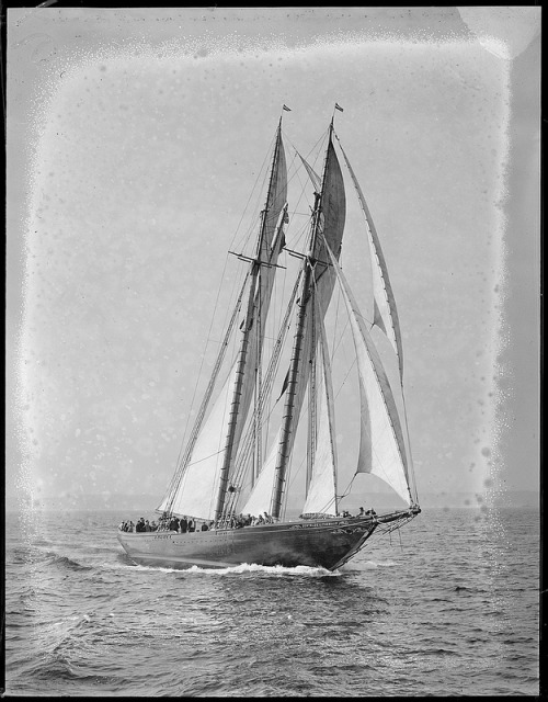 """ Gertrude L. Thebaud — 1931 ""  …  Fishing Schooner under sail off Gloucester, Mass … Photographer:  Leslie Jones"