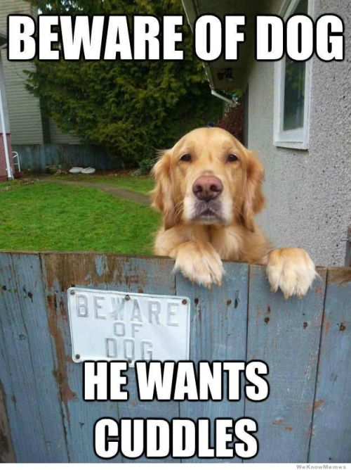 memehunter:  Beware Of Dog…http://memehunter.tumblr.com