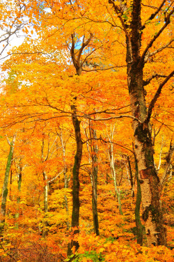 travelingcolors:  Fall in Vermont (Submitted and taken by paintbypixels, thank you!)