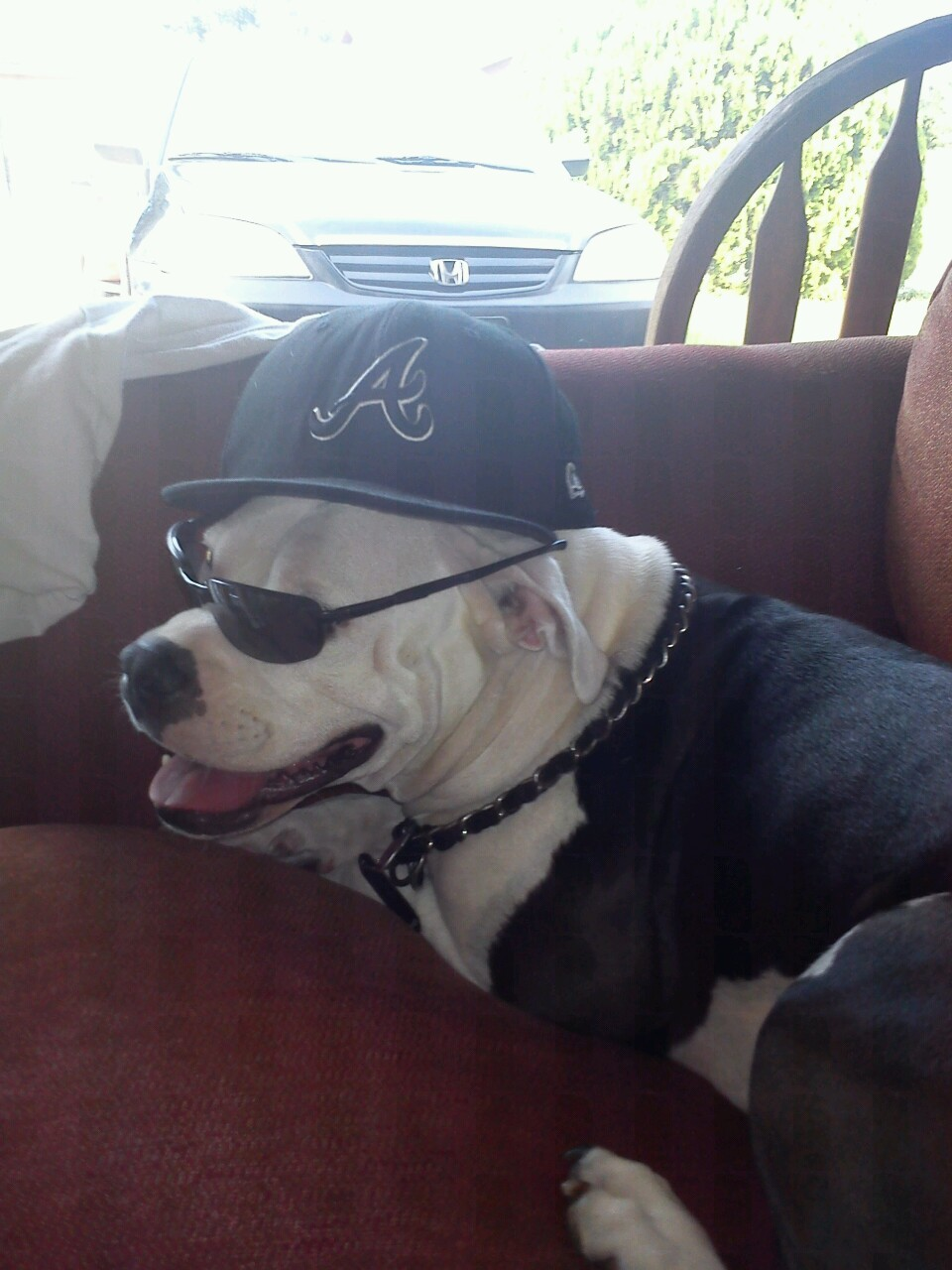How we roll #pitbull #bulldogs #bigpimpin