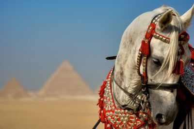 live-2-learn:  a horse in giza