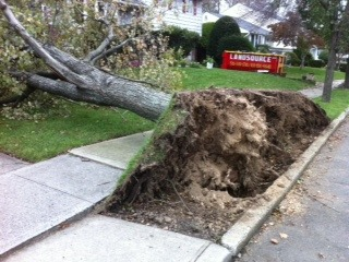 Storm damage in Syosset, Long Island, NY. Photo by Andrew.