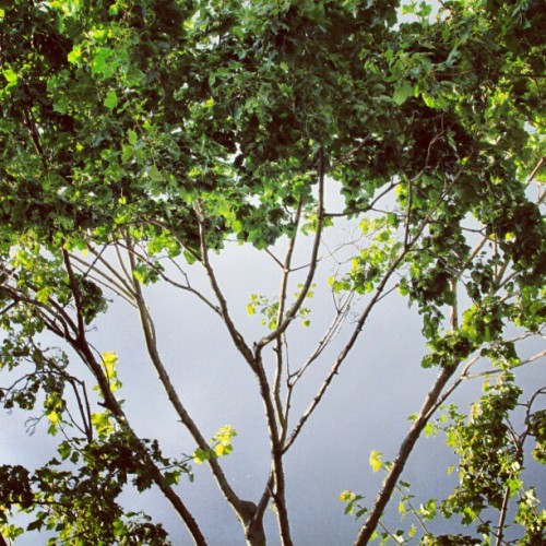 #nature #tree #green #summer