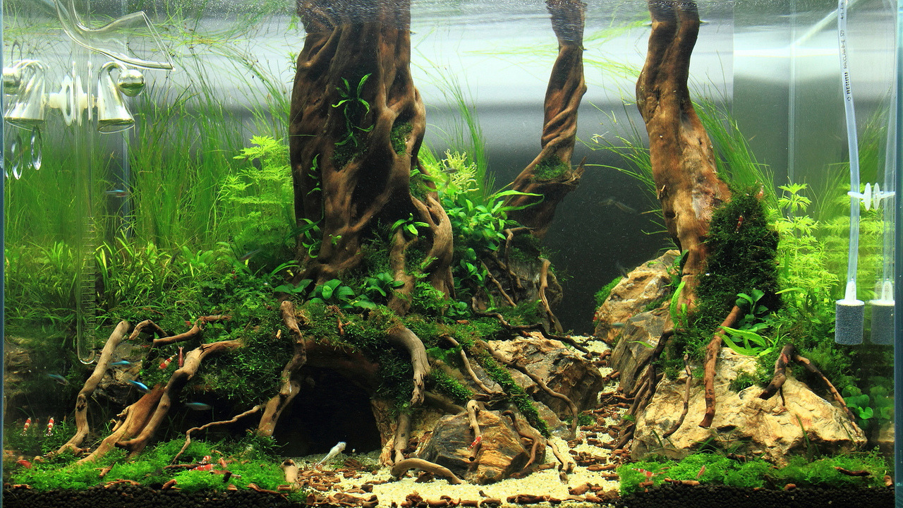 Szécsei Tibor: Forest Lair, 117l Two Weeks After The Start