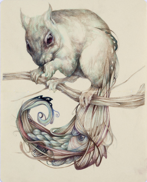 "marcomazzoni:  ""The Chemical Squirrel"" 2012, colored pencils and ink on paper, cm 26x21"