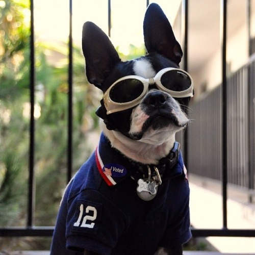 buzzfeedanimals:  WHO LET THESE ANIMALS VOTE?!  Today's the day when every man, woman, and animal let's their voice or bark or meow be heard.
