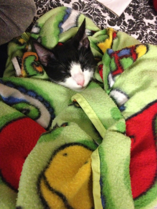 He instantly started purring when Blaine wrapped him up in his blanket.