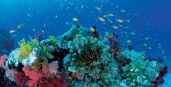 "THE GREAT BARRIER REEF is one of the planet's most famous natural wonders, stretching across 348,000sq.km and comprised of more than 2900 separate reefs. But disturbing new research reveals it has lost half its coral cover since 1985. The study from the Australian Institute of Marine Science (AIMS), published today in the US journal theProceedings of the National Academy of Sciences, provides a dim view of the reef's future. ""Coral cover on the GBR is consistently declining, and without intervention, it will likely fall to 5 to 10 per cent within the next 10 years,"" say the authors of the report. ""Without intervention, the GBR may lose the biodiversity and ecological integrity for which it was listed as a World Heritage Area."""