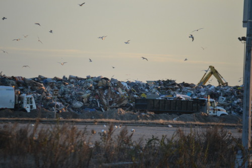Debris from the Rockaways piled up at Riis Park.