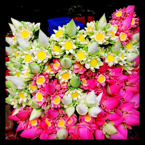 Flower Bouquets for Temple/Shrine Offerings in Siem Reap, Cambodia (at Royal Gardens)