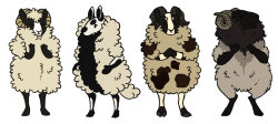 miromyhero:  Here, have some sheep Lithuanian coarse wool sheep Welsh badger Faced sheep  Jacob's sheep Hebredian sheep  my luzuz waz the zame az the one on the left, except without hornz.