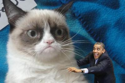 "I Google searched ""obama cat"" and this is what turned up."