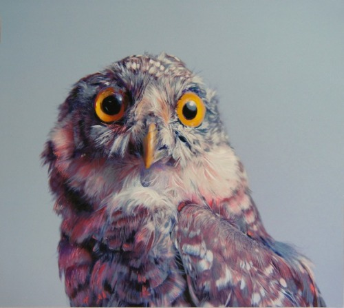 flavorpill:  Incredible, photorealistic drawings of owls   WHAT