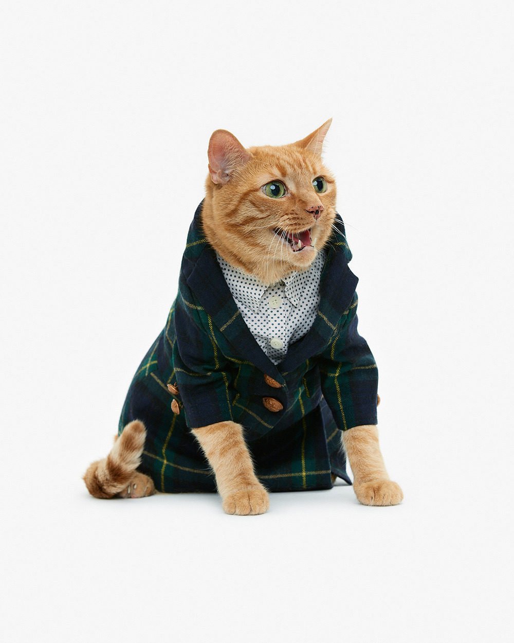 Cat in a blazer. Fancy, indeed. Order the 2013 cat calendar—featuring plenty of kitties in swanky garb—here. photo by united bamboo