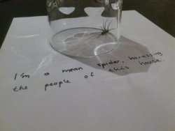 collegehumor:  Spider Gets a Good Old Fashioned Shaming  Bad spider, bad!