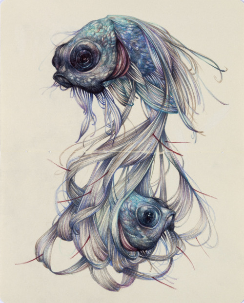 "marcomazzoni:  ""The Hairy Fish""2012, colored pencils and ink on moleskine paper, cm 26x21"