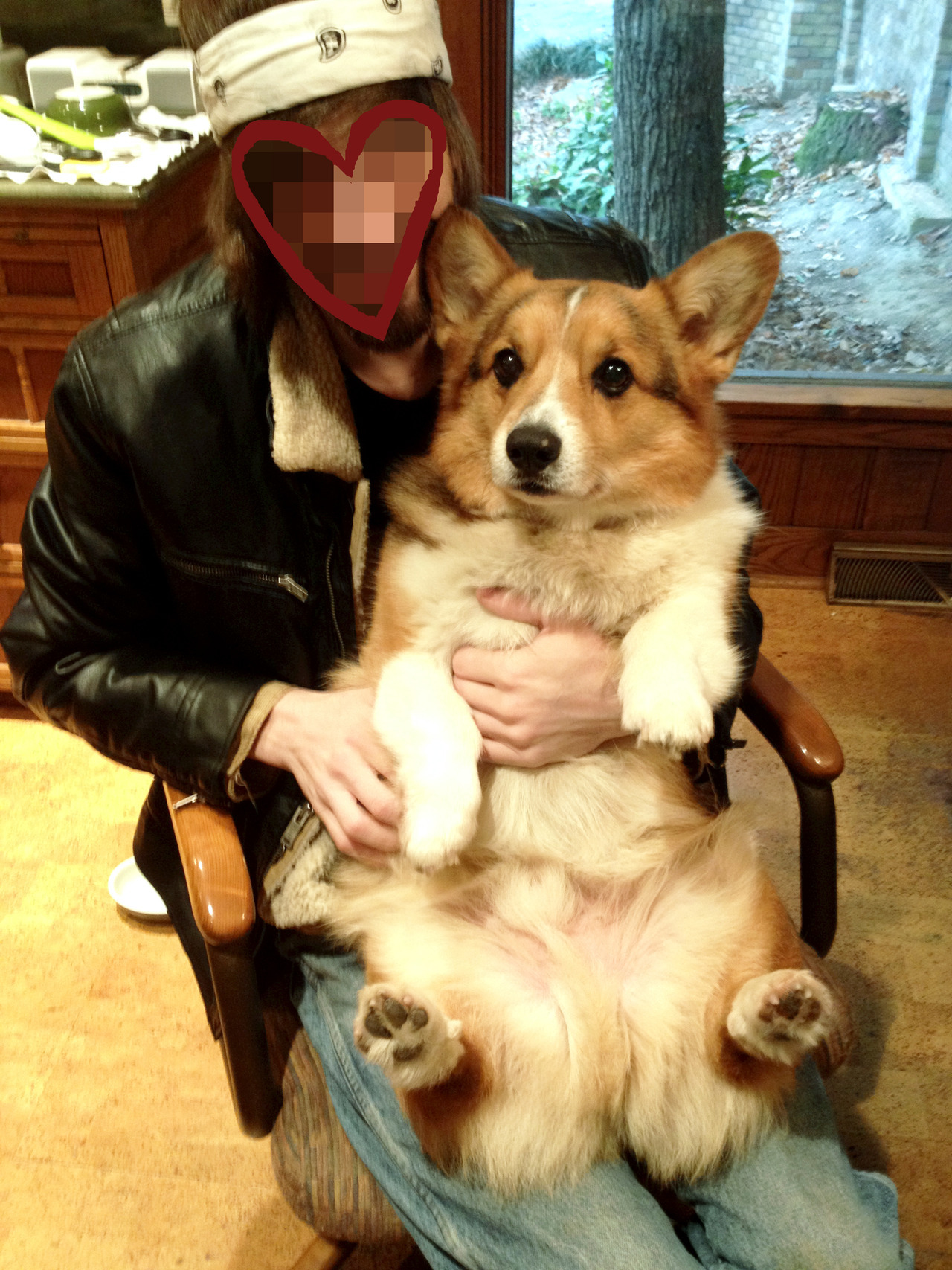 corgiaddict:   sammy the ham is hammin' it up for some lovin'! submitted by whoalookslikeacabbage aka CORG LOVER 5LIEF. reblog dis if u crey evertim!