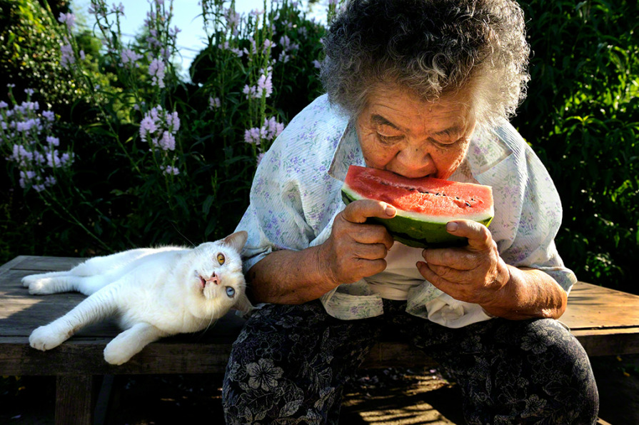 "brookwheresmallfishswim:  kittehkats:  Misao and Fukumaru.  ""We will never be apart."" 12 years ago, Japanese photographer, Miyoko Ihara (伊原 美代子) started to take photographs of her grandmother, Misao. Born in 1981 in Chiba (Japan), Miyoko Ihara has studied under Kenji Higuchi (樋口健二), after graduating from the Press Photography Course at the Nippon Photography Institute in 2002. Miyoko is also a member of The Photographic Society of Japan."" ""Under the sun, everyday is a good day. Another good day, Fukumaru"", Misao. Eight years ago, Misao found a odd-eyed kitten in the shed. She named the cat ""Fukumaru"" in hope that ""God of fuku"" (good fortune) comes and everything will be smoothed like a ""maru"" (circle)"". ""We'll never be apart!"", says Misao to Fukumaru. Both of them live in a tiny world, with dignity, with mutual love. Still today, under the blue sky, Misao and Fukumaro work in the fields and in these natural surroundings, where they shine like the stars."" Sources: asianoffbeat.com                fotomen.cn  oh my god these are so beautiful ;w; also wow that cat is a giant holy god"